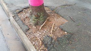 tree bowl repairs (2)