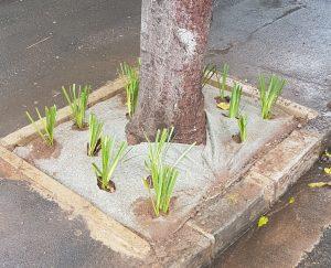 tree bowl repairs 3