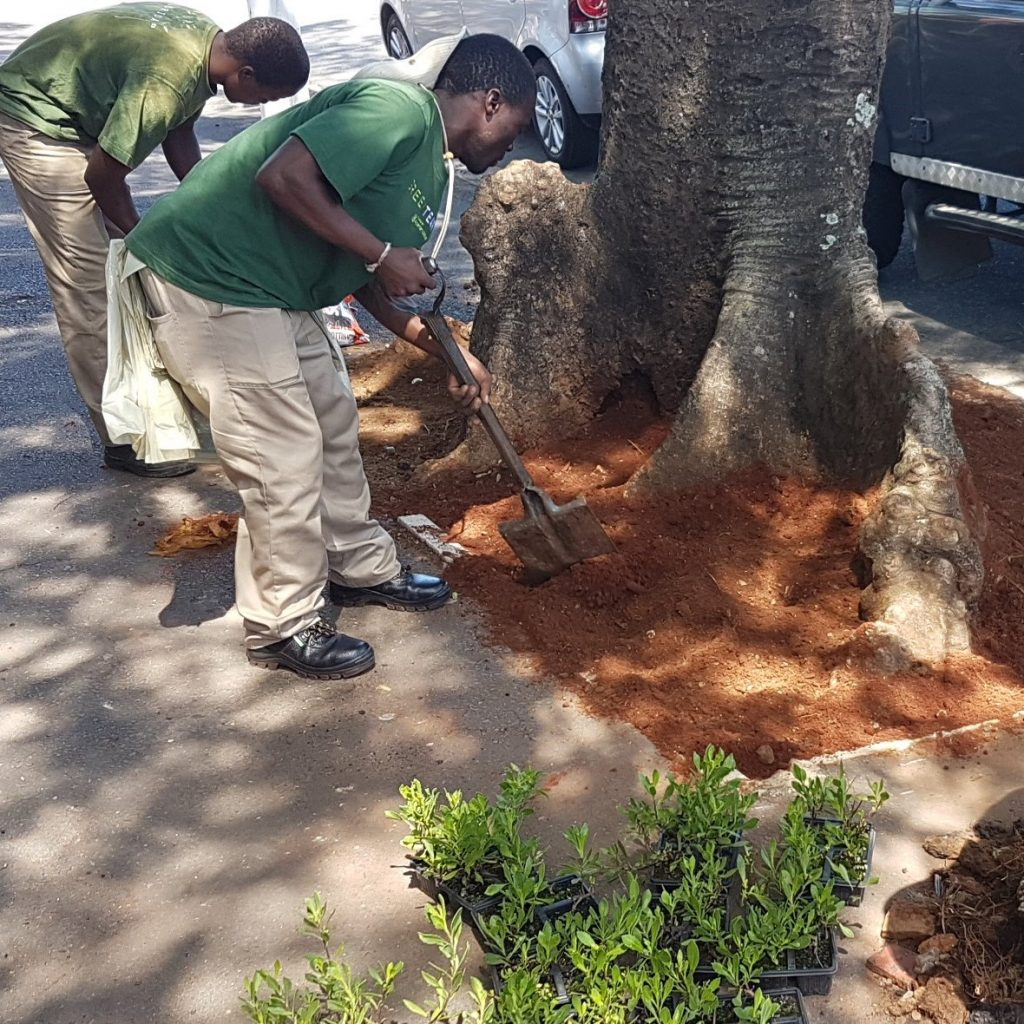 Florida Rd UIP Green Team replant tree bowls