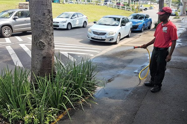 Tree bowls watered on florida rd