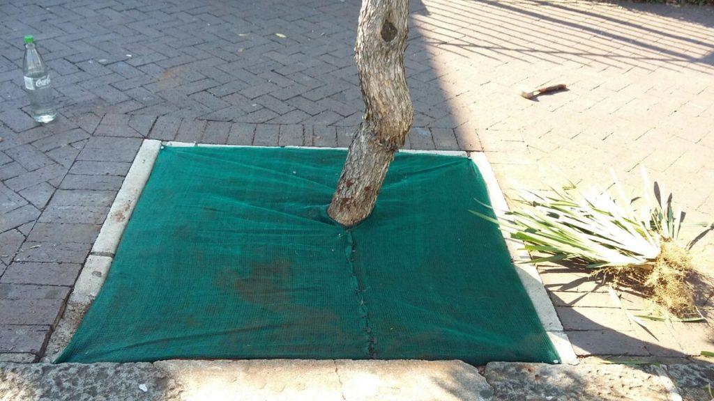 Maintaining Tree Bowls On Florida Rd